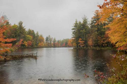 Patricia Dennis New England 4